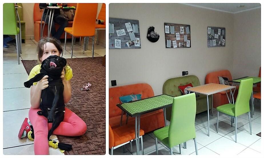 В Калининграде открывается первое в России кафе с мопсами - Новости Калининграда