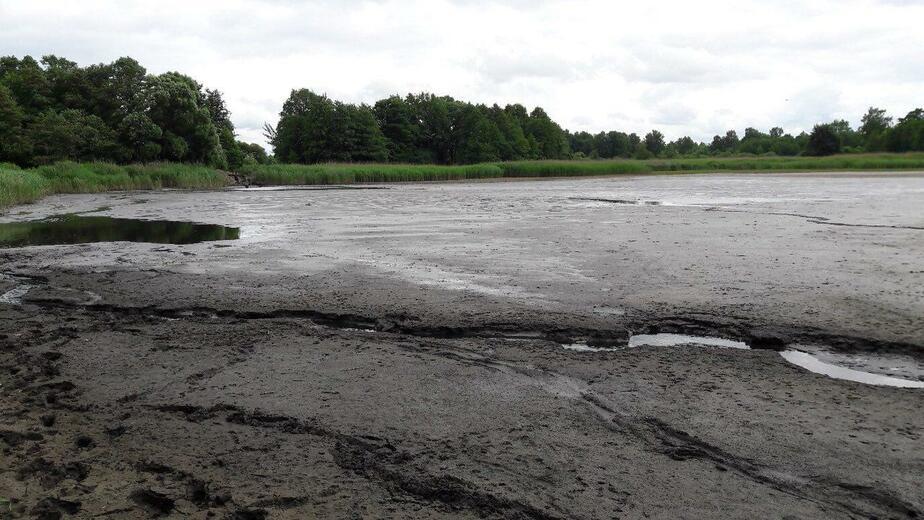 В озере под Багратионовском массово погибла рыба (фото) - Новости Калининграда | Фото: очевидец