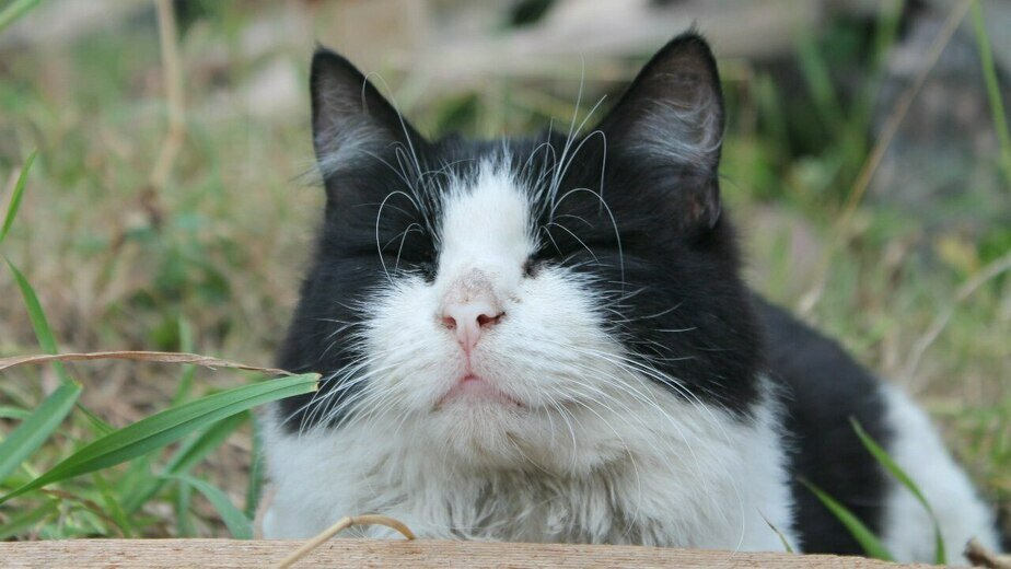 "Кошка Ева | Фото приюта ""Дом для одиноких кошек"" /  ""ВКонтакте"""
