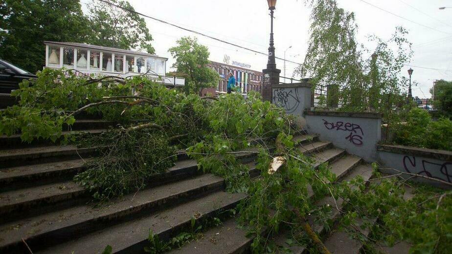 """В Калининграде из-за порывистого ветра упали семь деревьев  - Новости Калининграда   Архив """"Клопс"""""""