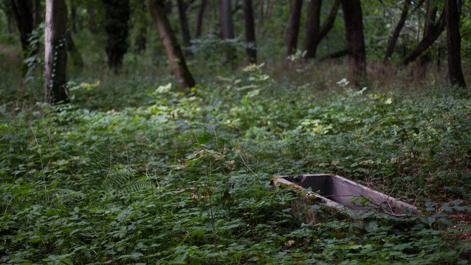 "Женщина, чьё тело нашли в лесу под Ладушкином, умерла от сердечного приступа - Новости Калининграда | Архив ""Клопс"""