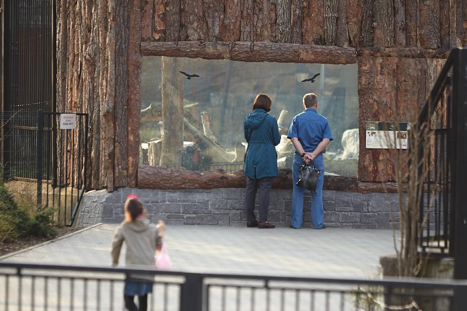 """В Калининградском зоопарке пойдут на экскурсию незрячие дети и их ровесники с завязанными глазами    Архив """"Клопс"""""""