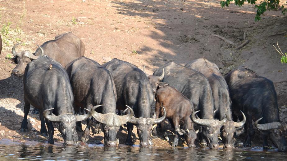 Слоны, водопады и деньги в ботинке: калининградец проехал семь тысяч километров по Африке на автобусах, поездах и маршрутках - Новости Калининграда