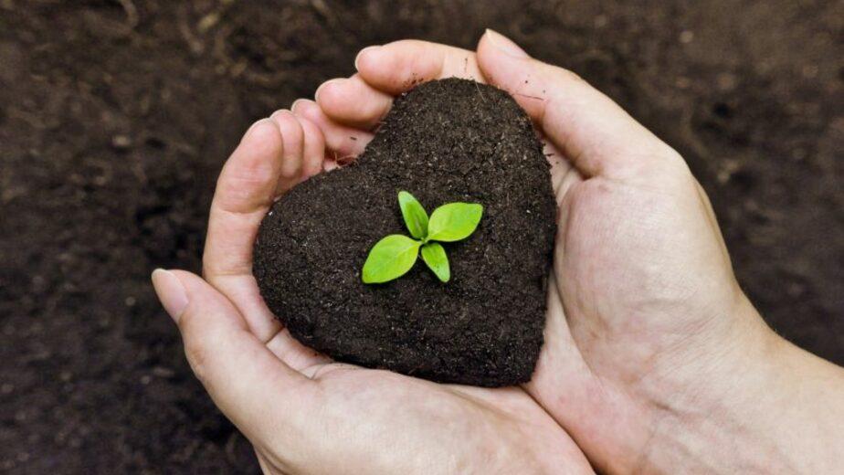 """Органическое удобрение """"Эко-Конь"""" — персональная кладовая ваших растений - Новости Калининграда"""