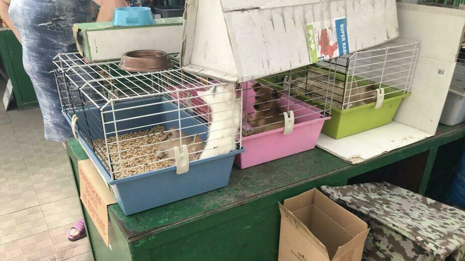 На птичьем рынке в центре Калининграда щенки и котята изнывают в клетках от жары и жажды  - Новости Калининграда   Фото: Вера Кондратьева