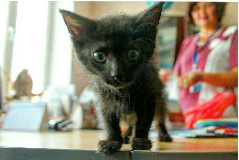 В Музее Мирового океана поселилась кошка - Новости Калининграда | Фото: пресс-служба Музея Мирового океана