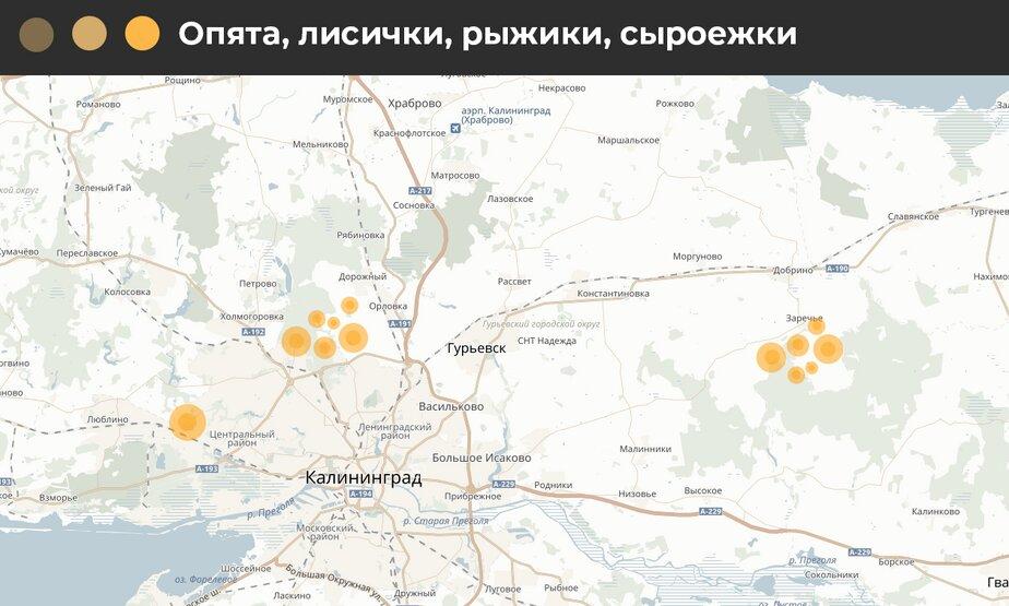 Снимаем шляпку: карта грибных мест Калининградской области - Новости Калининграда