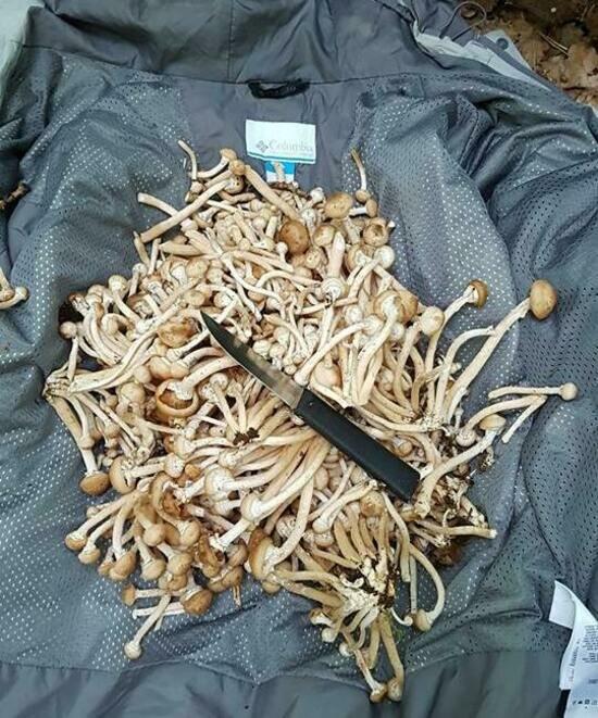 Снимаем шляпку: карта грибных мест Калининградской области - Новости Калининграда | Фото: Денис Артемьев