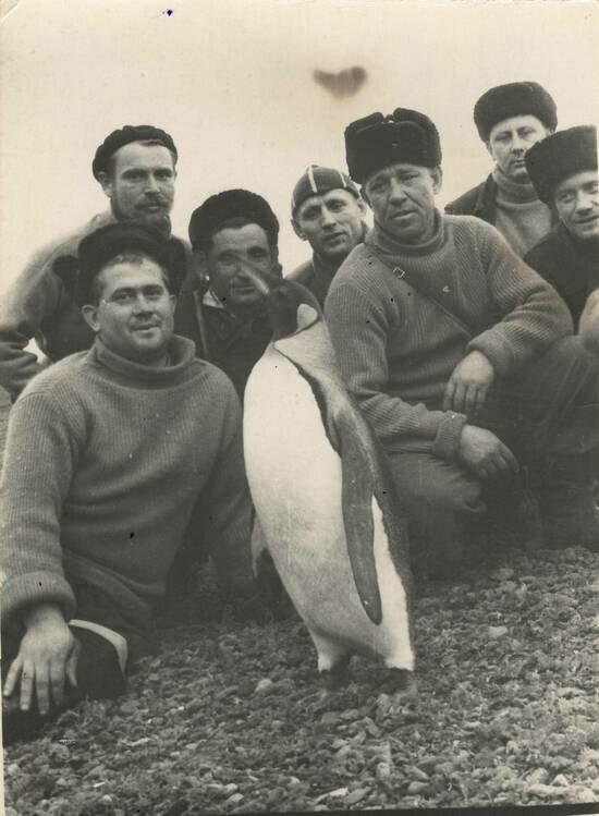Калининградские китобои фотографируются вместе с пингвином. | Фото из семейного альбома Татьяны Тишиной