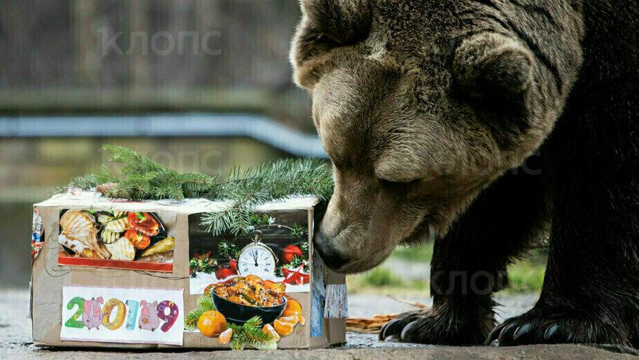 В Калининградском зоопарке поздравили с Новым годом животных (фото) - Новости Калининграда