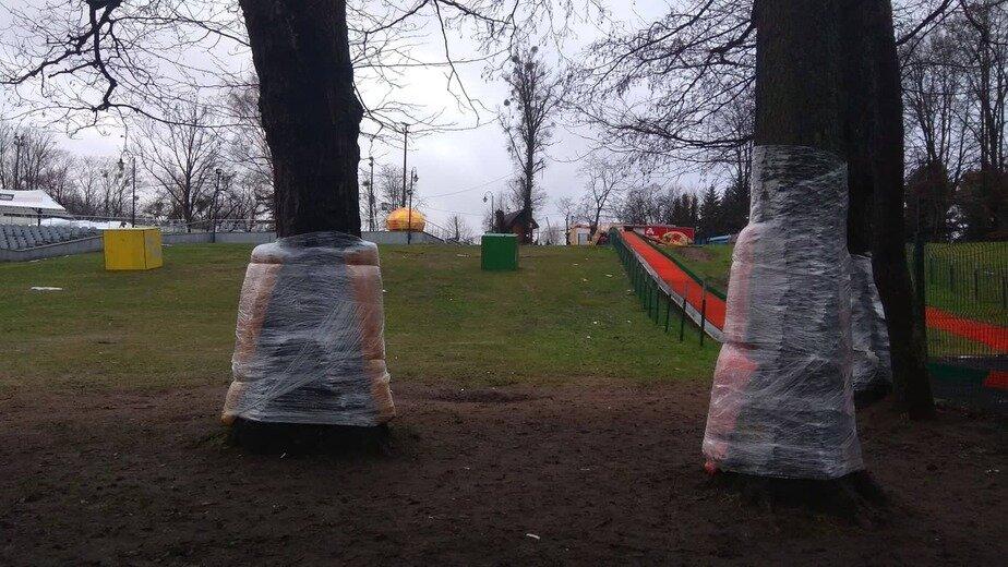В Центральном парке деревья у ледовой горки обезопасили с помощью спортивных матов - Новости Калининграда   Фото: администрация Калининграда / Facebook