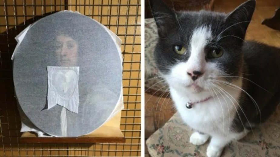 В Британии кот расцарапал картину XVII века стоимостью более 5 тыс. фунтов - Новости Калининграда | Фото: Twitter.com
