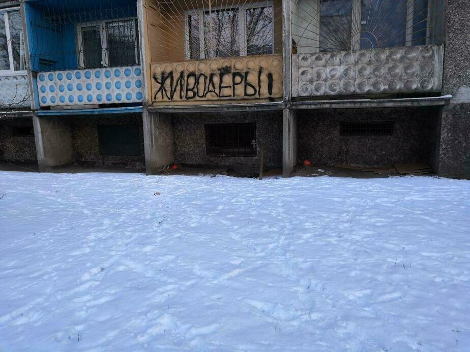 В Калининграде соседи устроили травлю пенсионерке из-за погибших  дворовых кошек - Новости Калининграда | Фото: Александр Тимофеев