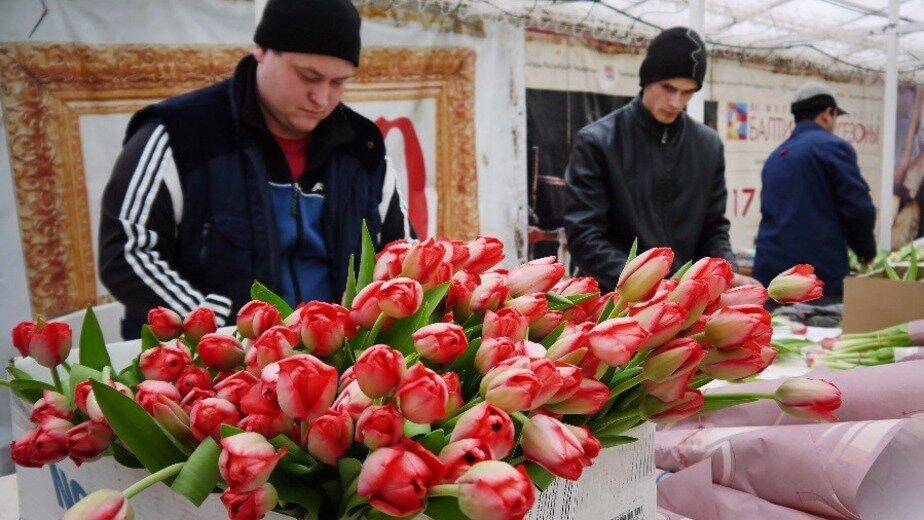 Королевство тюльпанов: под Багратионовском раскинулись поля прекрасных цветов - Новости Калининграда
