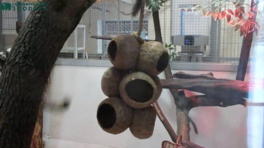 Качели из кокосовой скорлупы: как развлекаются звери в Калининградском зоопарке (видео) - Новости Калининграда | Кадр видеозаписи