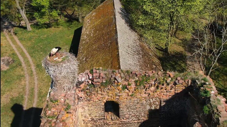 Аист свил гнездо на одной из старейших калининградских кирх (видео с дрона) - Новости Калининграда | Изображение: кадр из видео