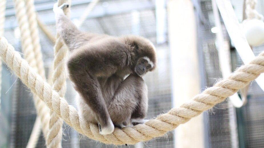 Калининградский зоопарк приглашает на Музейную ночь - Новости Калининграда