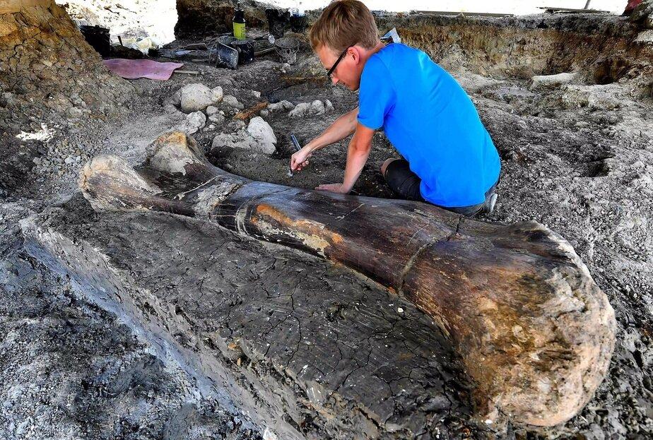 Во Франции нашли двухметровую бедренную кость динозавра возрастом 140 млн лет - Новости Калининграда | Фото: thehistoryblog.com