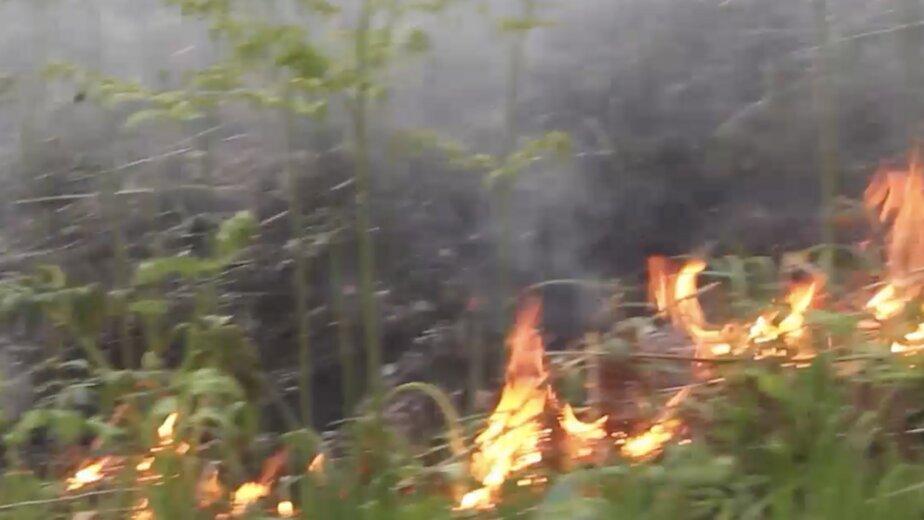 Как горит больше миллиона гектаров леса в Сибири (видео) - Новости Калининграда | Изображение: кадр из видео