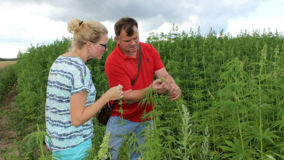 Конопля в полях фото скачать картинки про марихуана