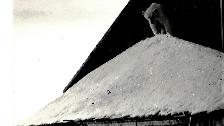 В посёлки гарнизона часто заходили белые медведи | Фото: из семейного архива Валерия Кочешкова