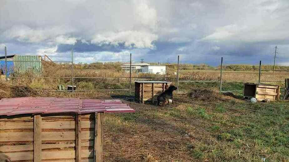 В Багратионовске требуется помощь в строительстве забора в приюте для собак - Новости Калининграда   Фото: приют