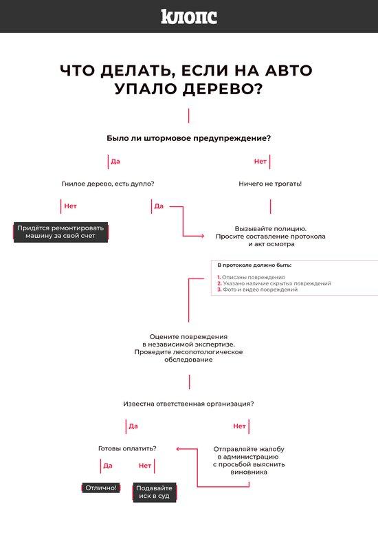 """Авторазбор """"Клопс"""": как получить компенсацию, если на вашу машину упало дерево   - Новости Калининграда"""