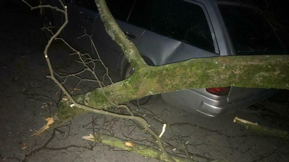 В Калининграде сильный ветер повалил более десятка деревьев   - Новости Калининграда | Фото: очевидец
