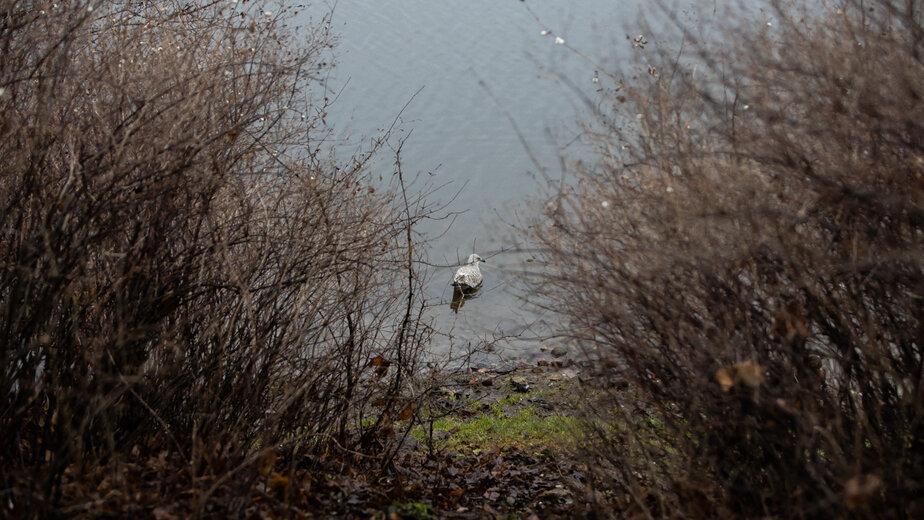 """В Нижнем озере Калининграда утонул мужчина - Новости Калининграда   Архив """"Клопс"""""""