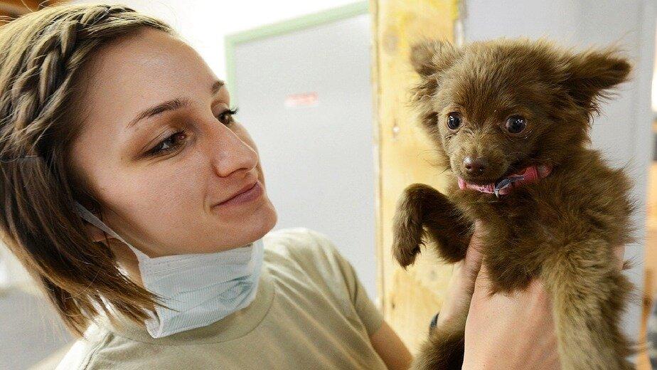В Калининграде появился первый компьютерный томограф для животных - Новости Калининграда