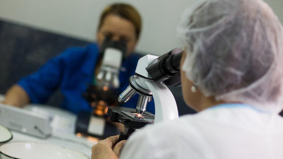 """Пережили свиной грипп, преодолеем и коронавирус: сходства и различия двух пандемий - Новости Калининграда   Архив """"Клопс"""""""