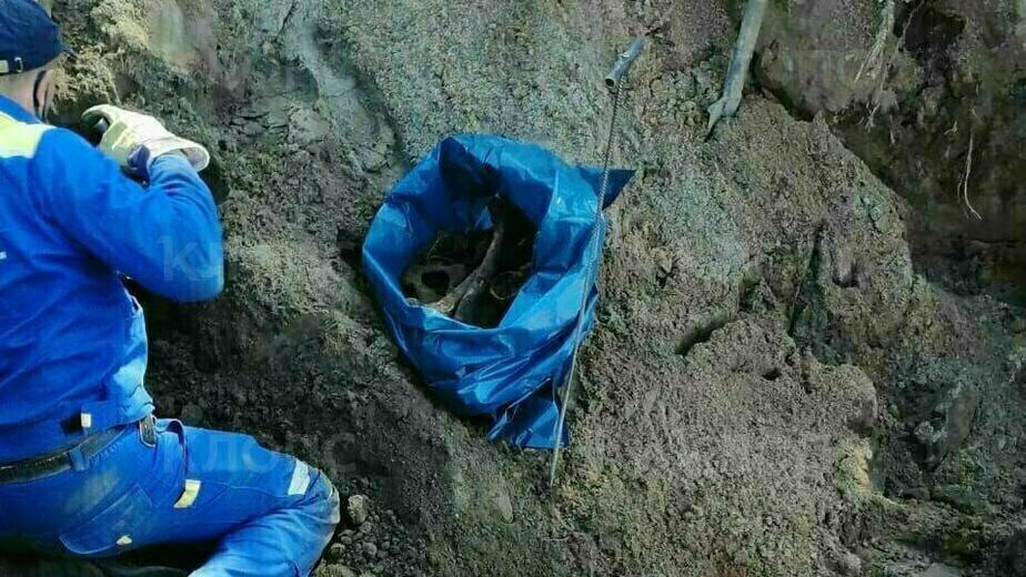 На Дачной при строительстве дороги нашли человеческие останки (фото, видео) - Новости Калининграда | Фото: очевидец