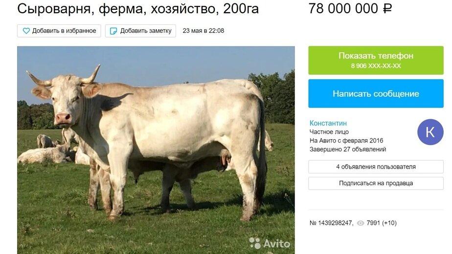 В области продают фермерское хозяйство с сыроварней - Новости Калининграда | Скриншот сайта Avito