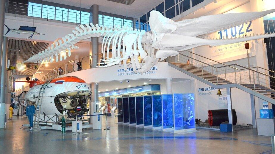 В Музее Мирового океана представят экспонаты возрастом 400 млн лет - Новости Калининграда
