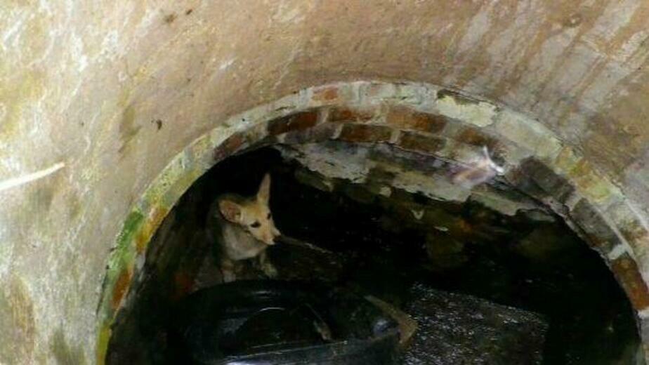 В Калининграде спасли упавшую в пустой колодец собаку (фото) - Новости Калининграда | Фото очевидца