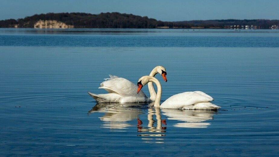 Провожаем июль: прогулки на катере и селфи с лебедями - Новости Калининграда