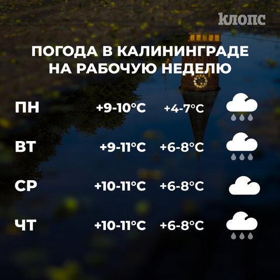 В Калининградской области на наступившей неделе ожидаются практически ежедневные осадки. По данным Гидрометцентра РФ, дождь не ожидается только в среду.