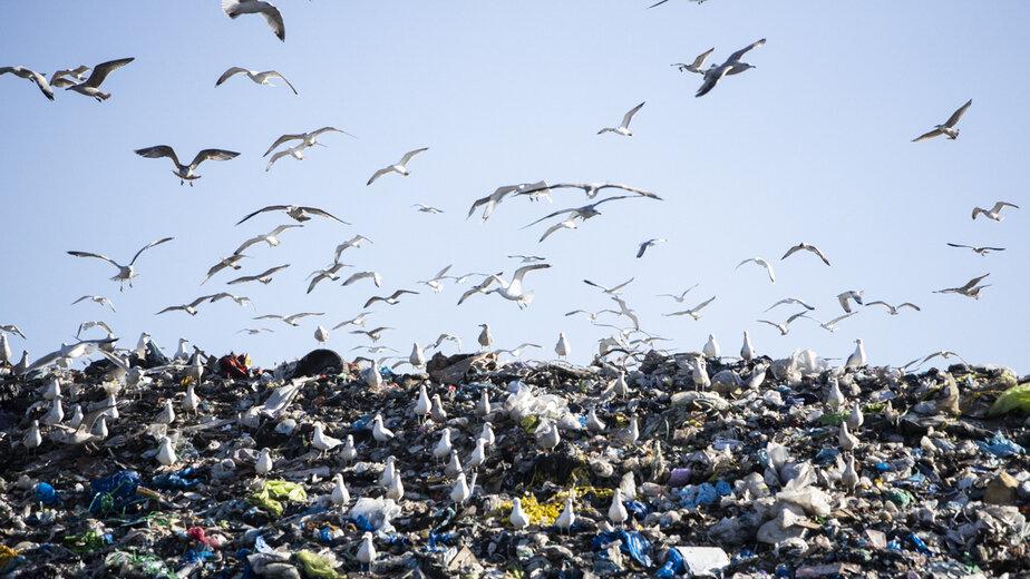 Цифровая утилизация: как технологии помогают следить за мусорными полигонами и вывозом отходов - Новости Калининграда