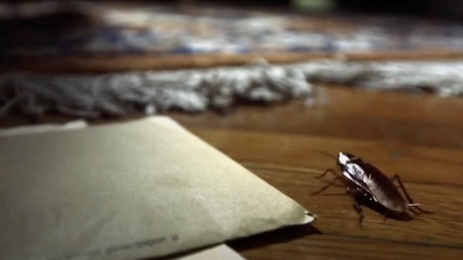 В Роспотребнадзоре предупредили о скором нашествии тараканов - Новости Калининграда | Изображение: кадр из эфира телеканала National Geographic