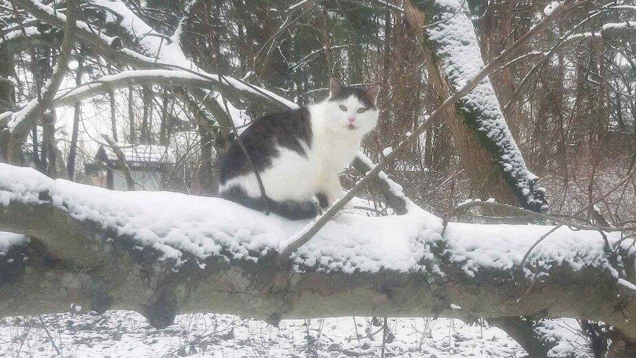 На фото кот Фридрих Вильгельм Фердинанд | Фото предоставила Ира Эрдели