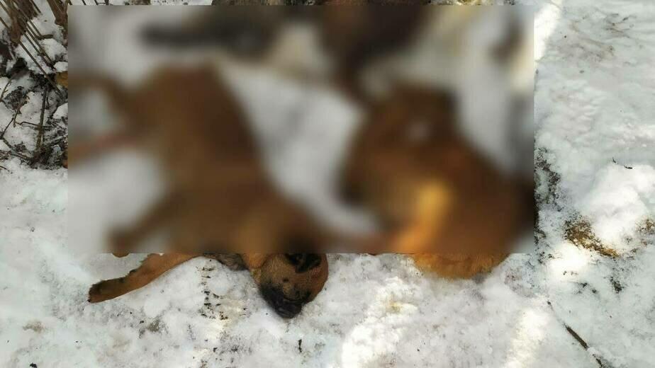 В питомнике погибло более 30 собак | Фото: Александр Пищик