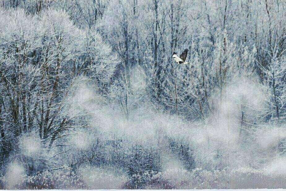 Фото дня: зима на Виштынецком озере - Новости Калининграда | Фото: Александр Подгорчук
