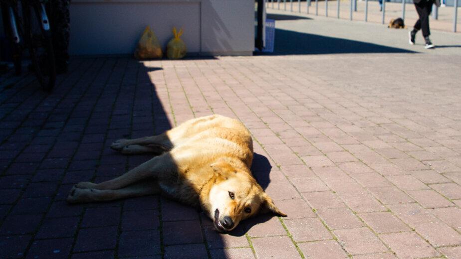 За и против: нужно ли избавиться от собак на Северном вокзале - Новости Калининграда