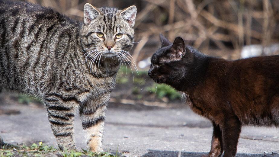 В России начались испытания вакцины для профилактики аллергии на кошек - Новости Калининграда   Фото: архив «Клопс»