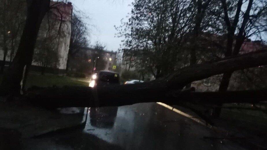 Поваленные деревья и смерти на дороге: 11 событий в Калининграде и области за выходные - Новости Калининграда | Фото очевидца
