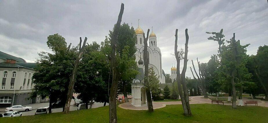 На площади Победы в Калининграде вырубят 11 деревьев  - Новости Калининграда | Фото: мэрия Калининграда