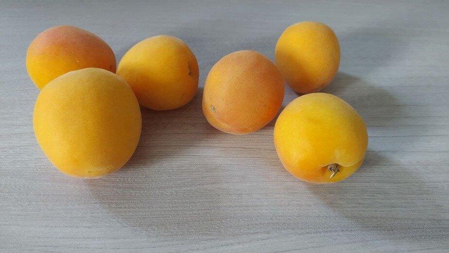 Диетолог рассказала, сколько абрикосов в день можно съесть без вреда для здоровья - Новости Калининграда | Фото: «Клопс»