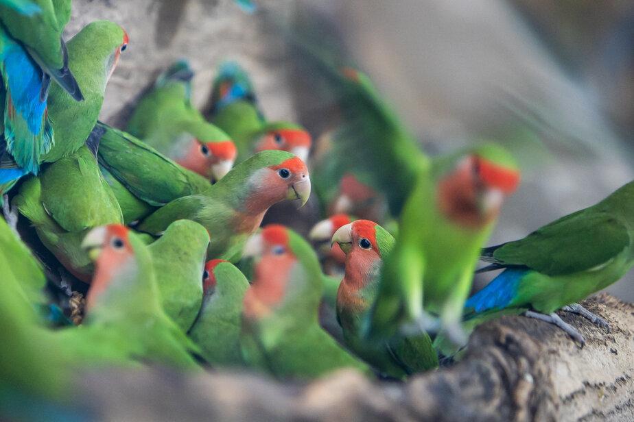 В Калининградском зоопарке открыли обзорную площадку для посетителей около «Дома тропических птиц» - Новости Калининграда   Фото: Архив «Клопс»