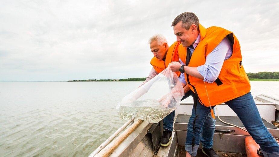 выпуск мальков сига в Куршский залив   фото пресс-службы правительства области