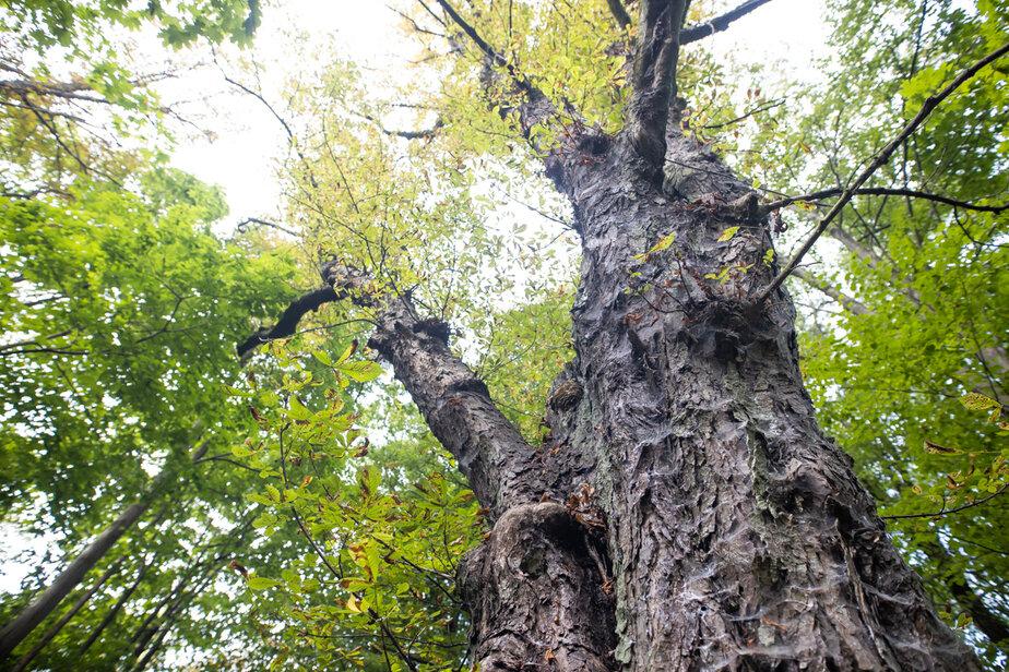 Власти предложили отдать треть Суздальского парка в Калининграде под застройку - Новости Калининграда | Фото: Архив «Клопс»